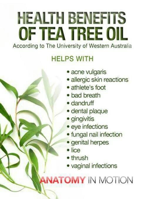 medicinal applications of tree fungus in humans